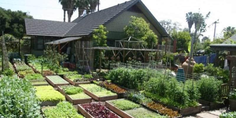 Conheça a minifazenda no meio da cidade que produz 3 toneladas de alimentos orgânicos por ano 1