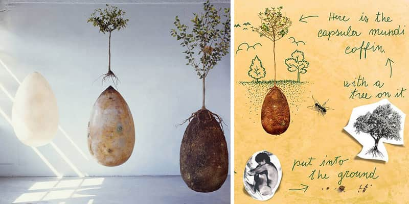 Em vez de caixões, pessoas poderão ser enterradas em cápsulas orgânicas que se transformarão em árvores 1