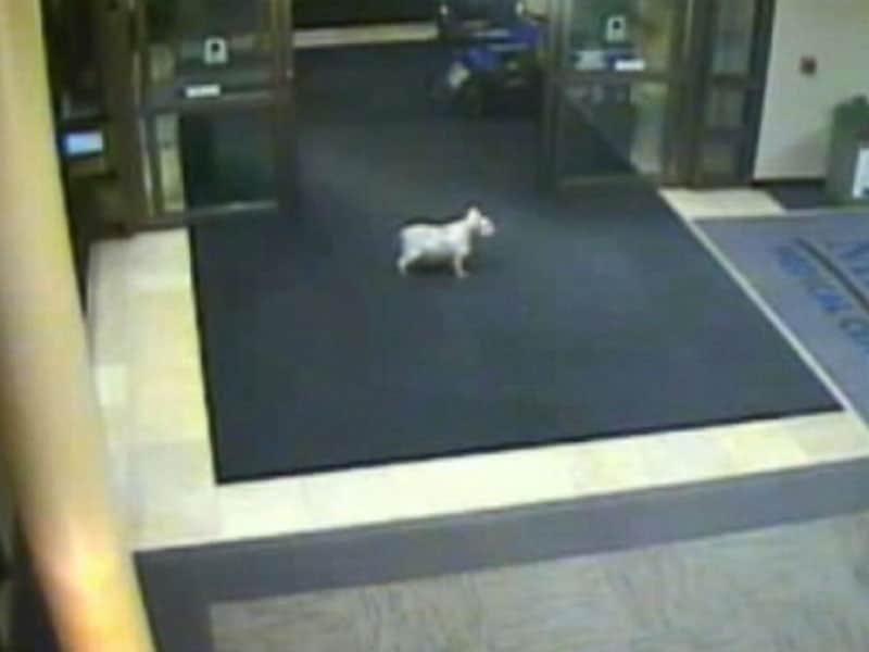 kcrg_dog_hospital_01_jc_150212_4x3_992