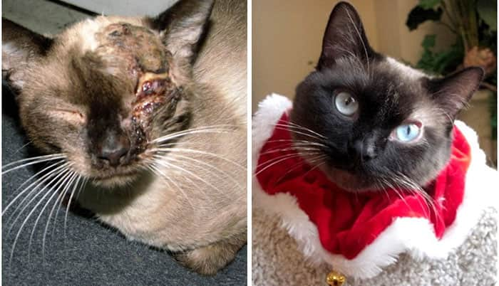 rescue-cat-abandoned-before-after-142__700