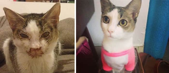 rescue-cat-abandoned-before-after-152__700
