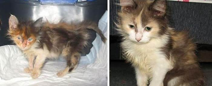 rescue-cat-abandoned-before-after-202__700