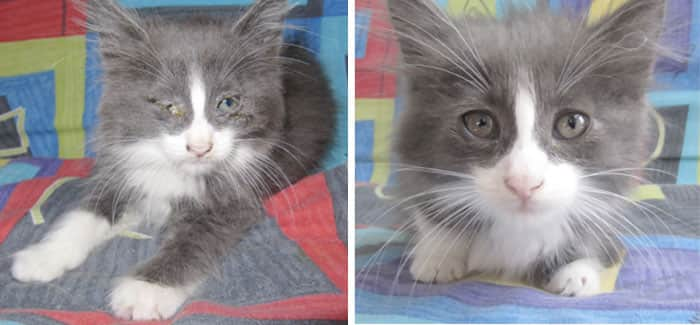 rescue-cat-abandoned-before-after-23__700