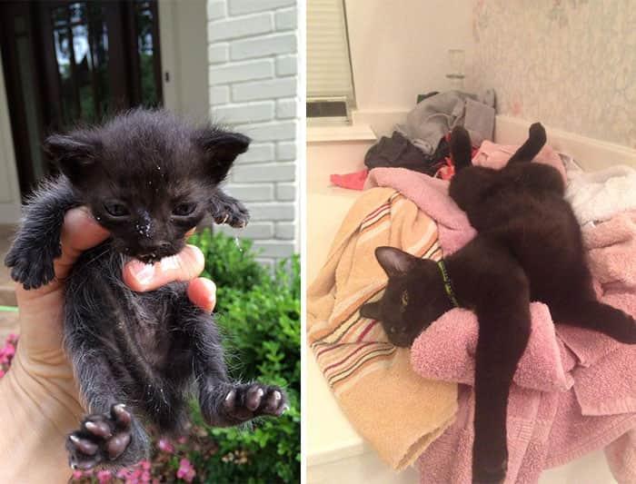 """Imagens poderosas de """"Antes e Depois"""" de gatos resgatados (Imagens fortes) 1"""