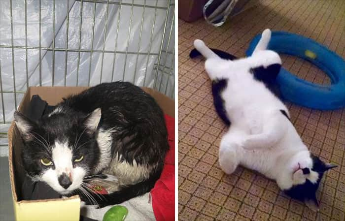 rescue-cat-abandoned-before-after-36__700