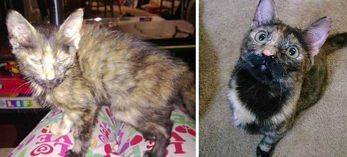 rescue-cat-abandoned-before-after-38__700