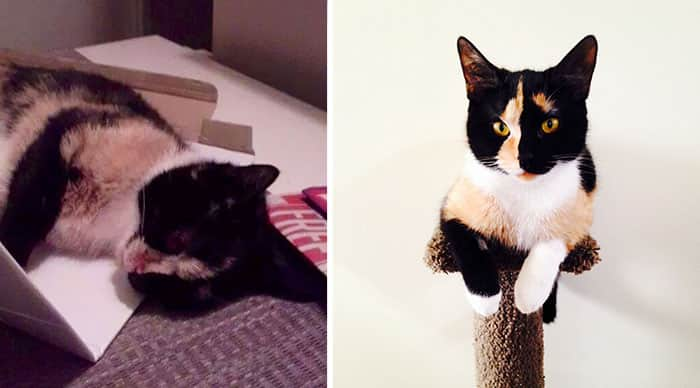 rescue-cat-abandoned-before-after-40__700