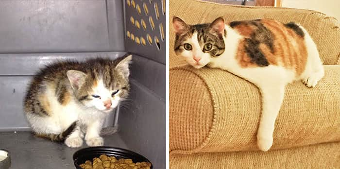rescue-cat-abandoned-before-after-421__700