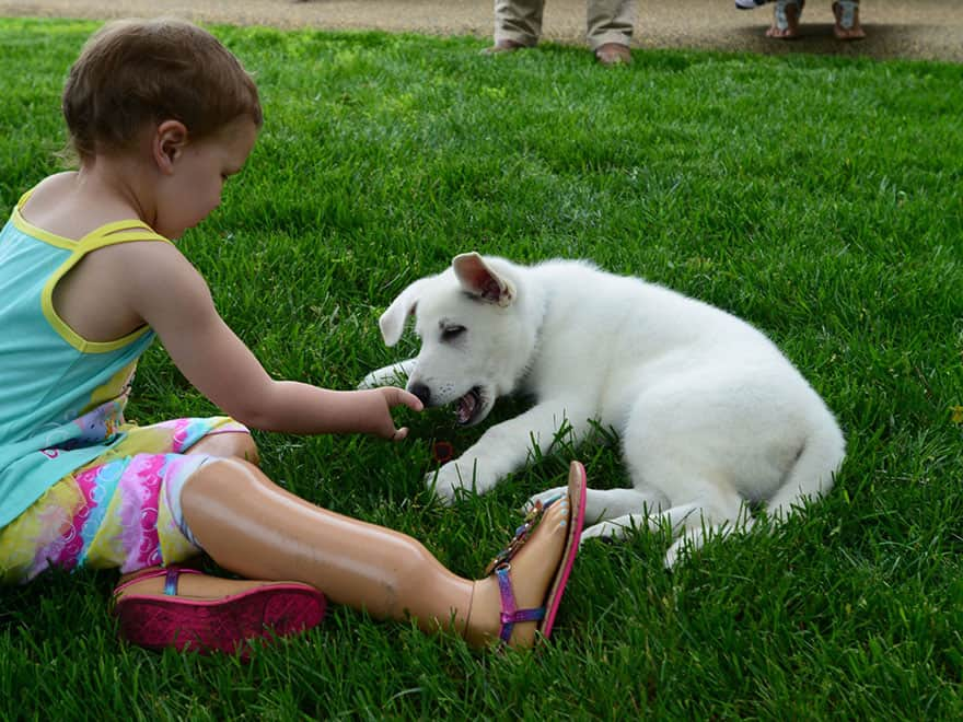3-year-old-girl-amputated-legs-puppy-without-paw-sapphyre-johnson-lt-dan-8