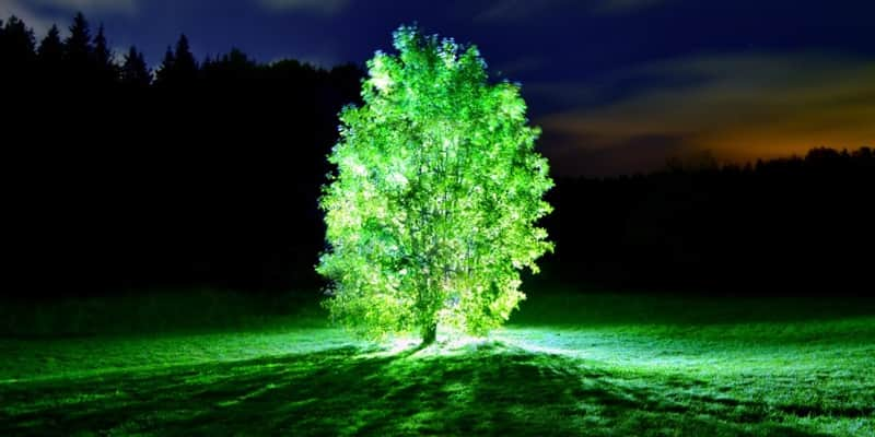 Japoneses criam proteína que faz árvores brilharem e futuramente podem substituir postes 1