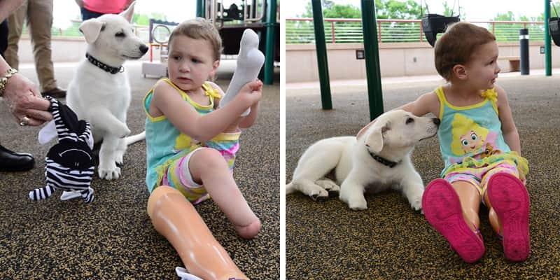 Menina de 3 anos que não tem os pés, adota filhote que também não tem uma patinha 1