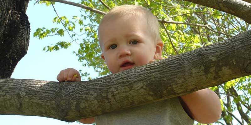 12 cidades brasileiras que plantam uma árvore para cada bebê que nasce 1