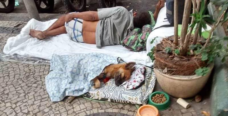 Morador de rua improvisa caminha para cachorro e foto viraliza na web 2