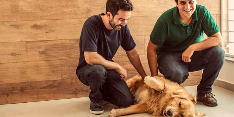 """Nesse """"airbnb para animais"""" você pode deixar seu cãozinho na casa de pessoas de confiança 2"""