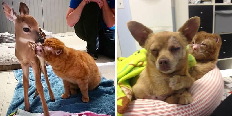 Gato que foi salvo de incêndio agora cuida de outros animais em hospital veterinário 1
