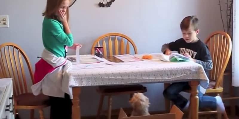 Depois de anos pedindo por um cão, veja a reação adorável dessas crianças quando ele chegou 2