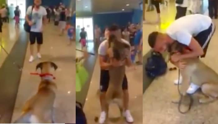 Cachorro se emociona ao reencontrar seu dono no aeroporto 1
