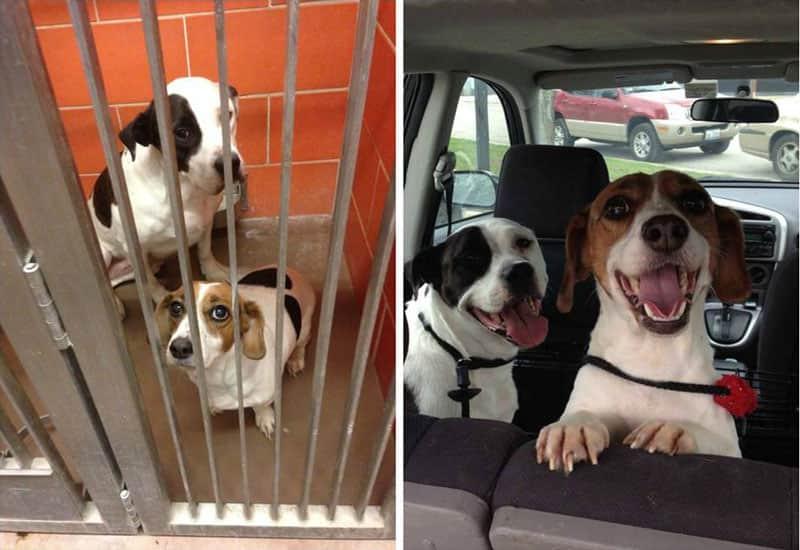 12 imagens mostram antes e depois de cães adotados 5
