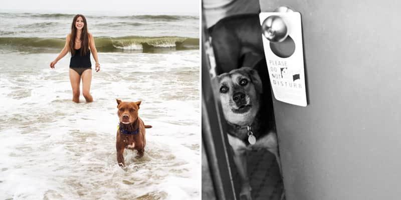 Fotógrafa faz linda série para se despedir de seu cão em fase terminal 1