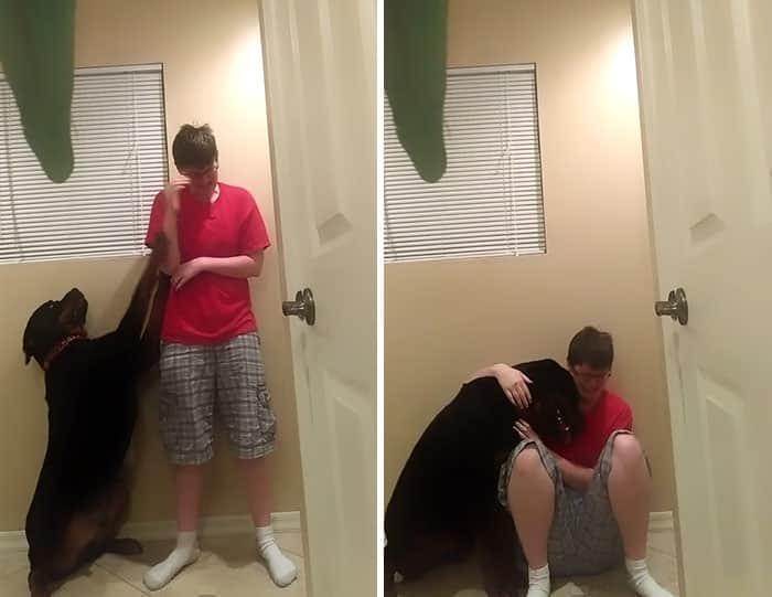 dog-asperger-meltdown-intervention-danielle-jacobs-2