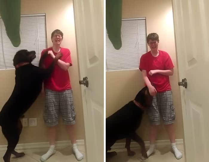 Rottweiler resgatado ajuda jovem com síndrome de Asperger em crise 2