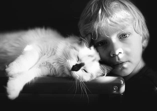 Mãe documenta a relação de seus filhos e gatos em série cativante 3