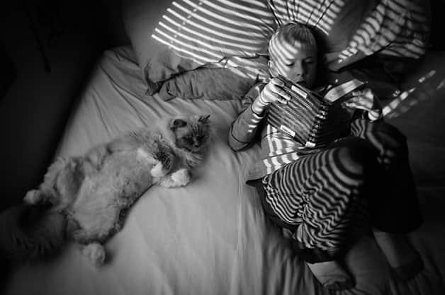 gatos-filhos18
