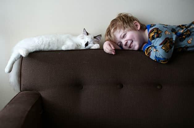 gatos-filhos24