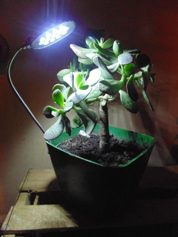 luz_vegetal