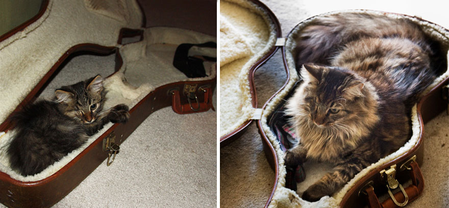 xx-before-and-after-photos-of-cats-growing-up-3__880a