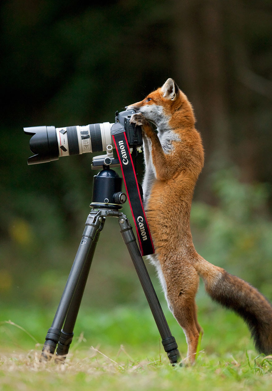 animals-with-camera-helping-photographers-13__880a