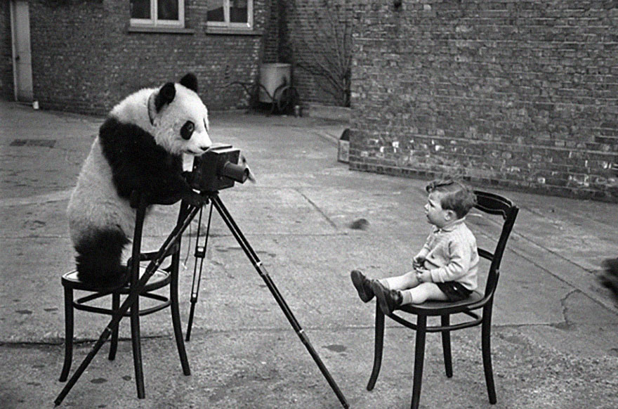 animals-with-camera-helping-photographers-15__880a