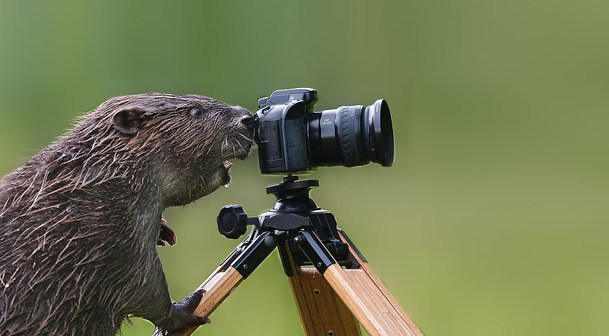 animals-with-camera-helping-photographers-17__880a