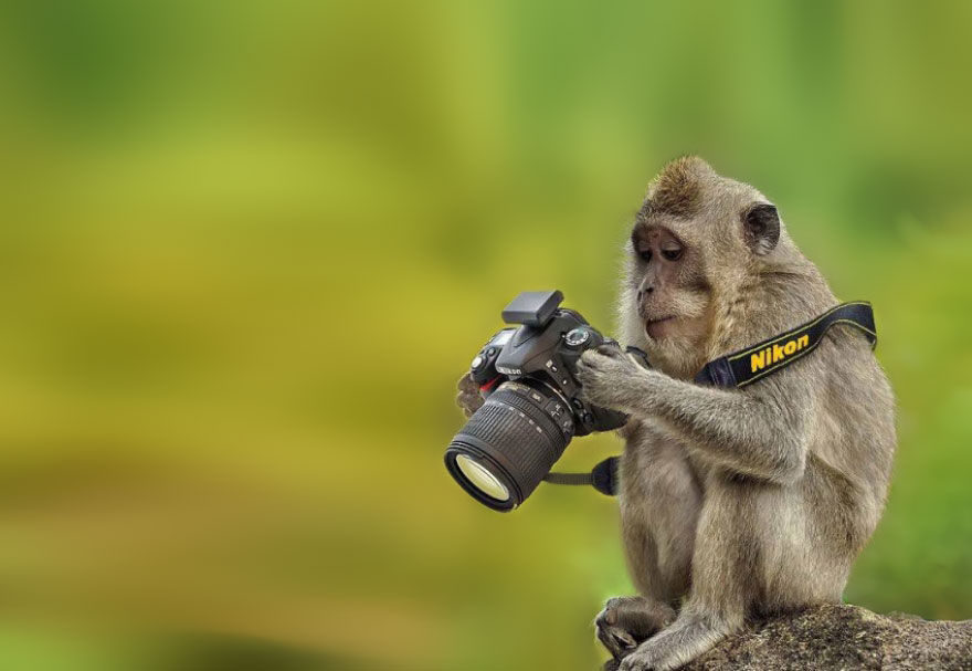 animals-with-camera-helping-photographers-18__880a
