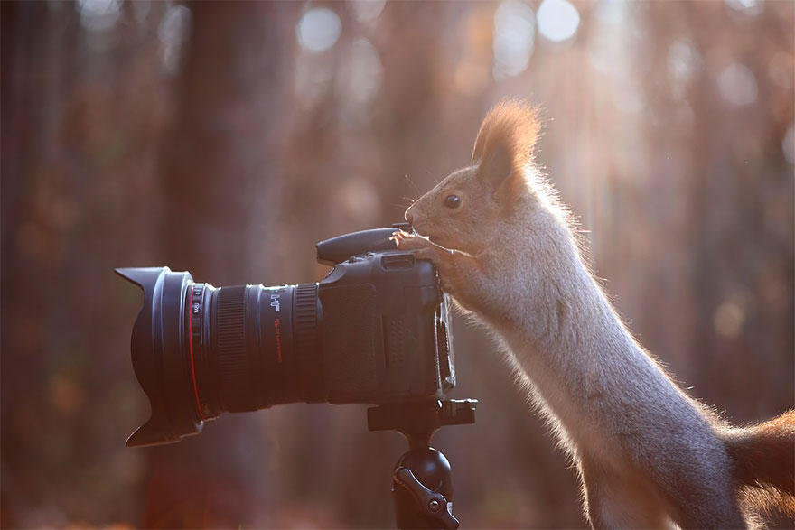 animals-with-camera-helping-photographers-27__880a