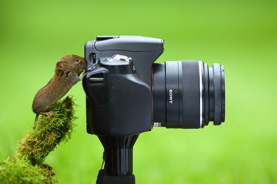 animals-with-camera-helping-photographers-3__880a