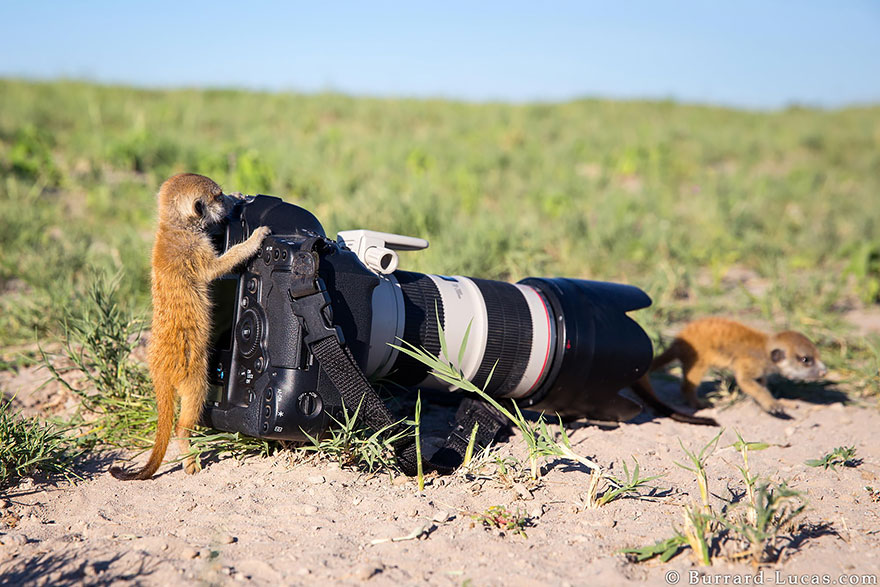 animals-with-camera-helping-photographers-4__880a
