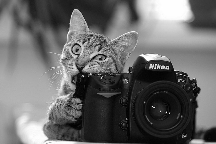 animals-with-camera-helping-photographers-8__880a