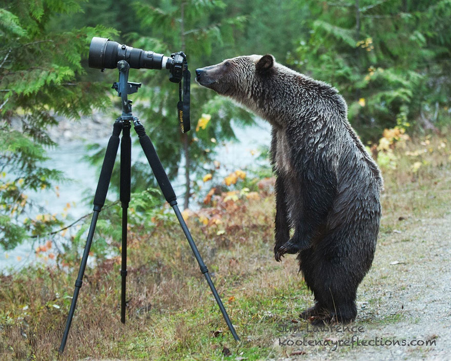 animals-with-camera-helping-photographers-9__880a