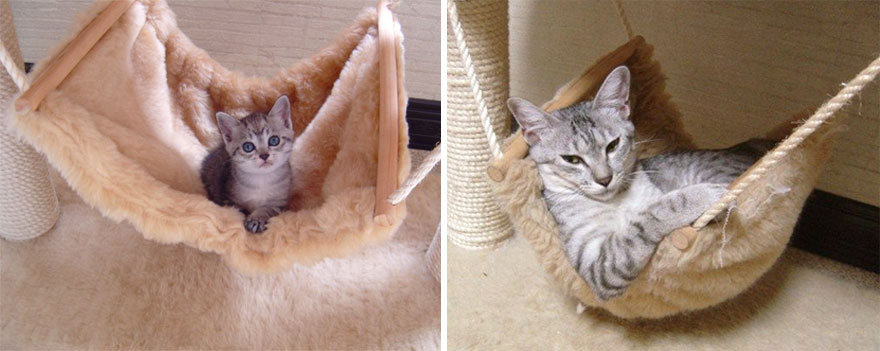 before-and-after-growing-up-cats-14__880a