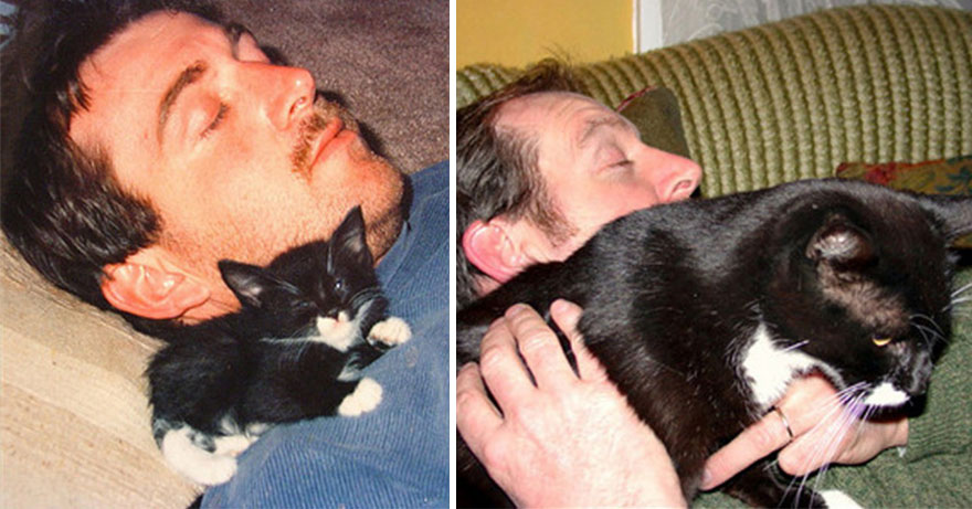 before-and-after-growing-up-cats-20__880a