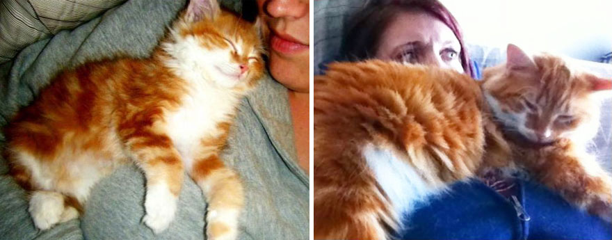 before-and-after-growing-up-cats-28__880a
