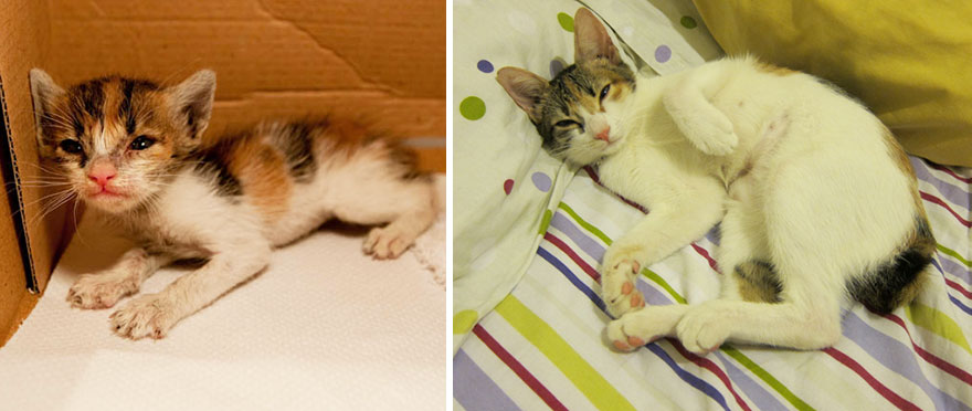 before-and-after-growing-up-cats-30__880a