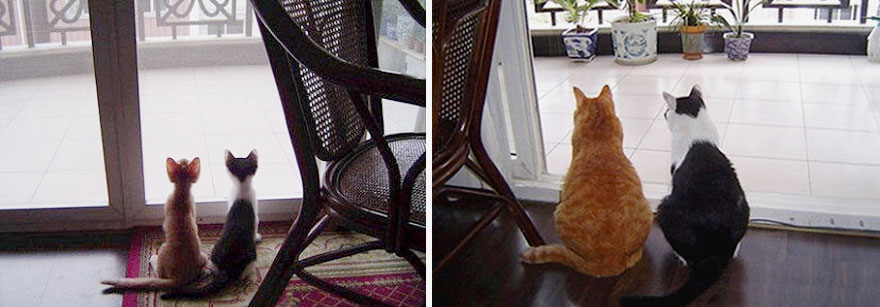 before-and-after-growing-up-cats-33__880a