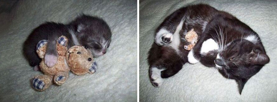 before-and-after-growing-up-cats-4__880a