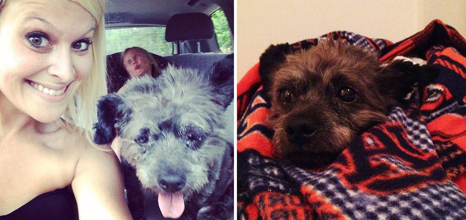 Mulher adota cãozinho em estado terminal para garatir que seus últimos dias sejam muito felizes 1