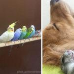 Um cachorro, 8 pássaros e um hamster são os melhores amigos mais fofos do mundo 2