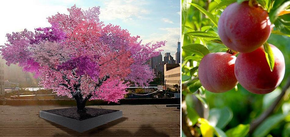 Professor cria árvore híbrida que dá mais de 40 tipos de frutos na Pensilvânia 1