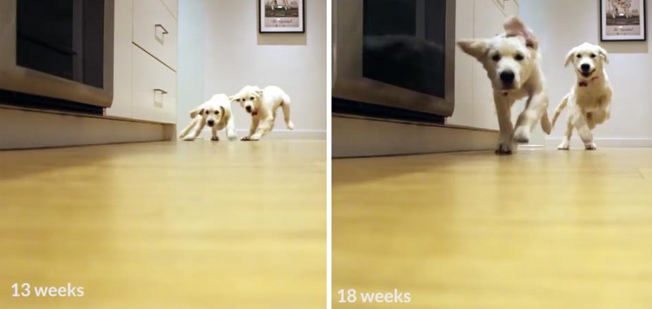 Timelapse mostra filhotes correndo para comer ao longo de 9 meses 1