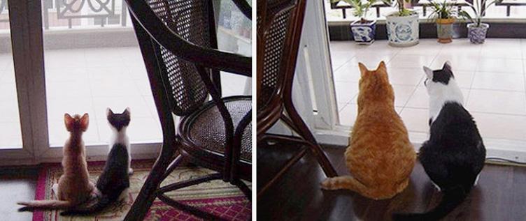 17 fotos hilárias de antes e depois de gatos crescidos 4